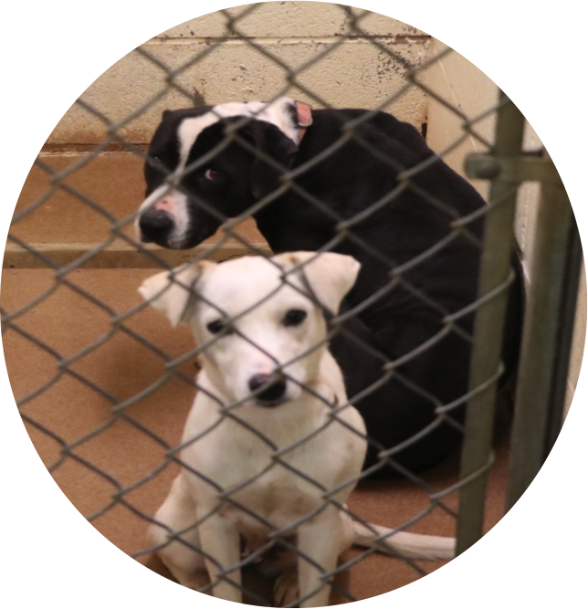 2 dogs at the Animal Welfare Department